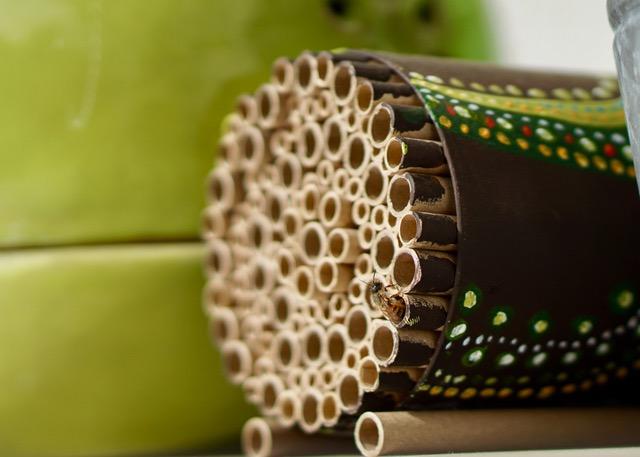 Workshop: Wildbienenwerkstatt für Kinder (5-7 Jahre)